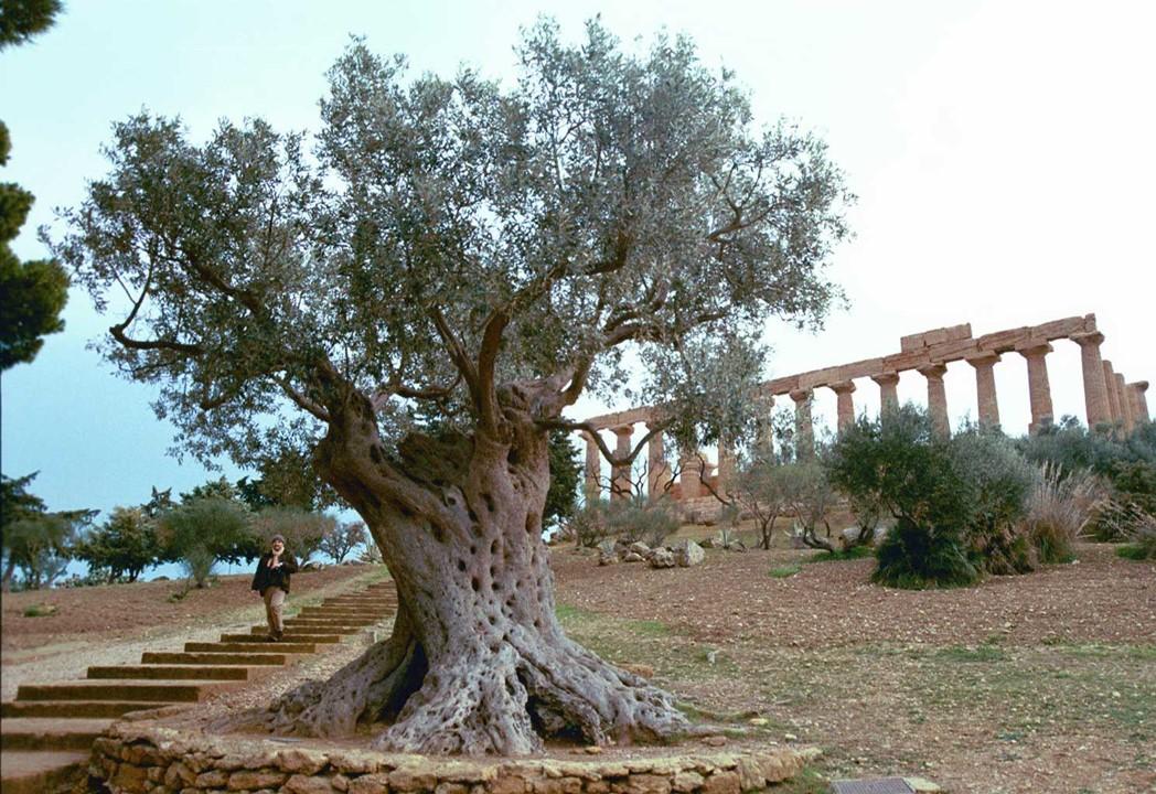 Olivenöl mit Tempel im Hintergrund